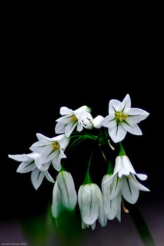 Ramillet de flors a Capo d'Orso