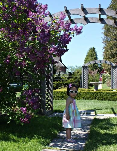 experimental farm:  lilacs