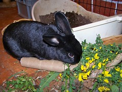 Jupiter loves Scotch broom