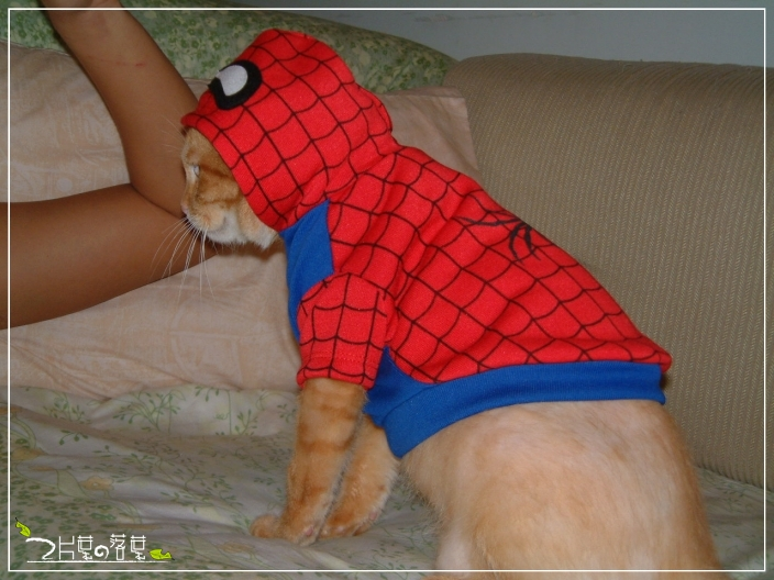 Spider-Cat_04.jpg