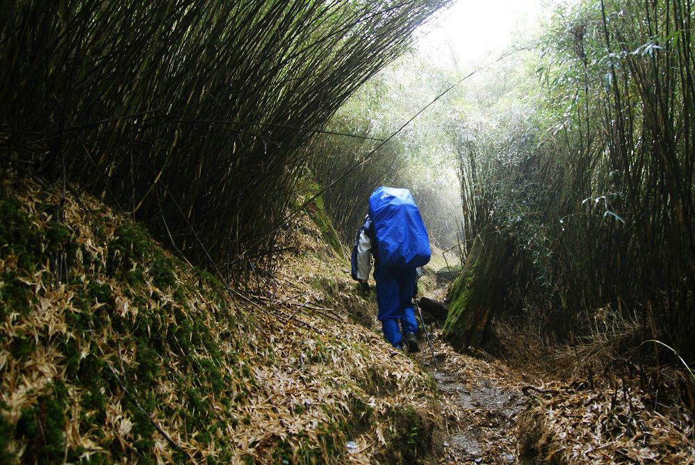 奇萊Day1-22 陡上箭竹林