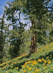Driveway Butte trail1
