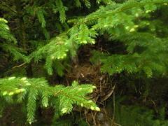 25 - Nest