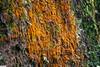 algae (jasonlouphotography) Tags: nature cameronhighlands sgpalas