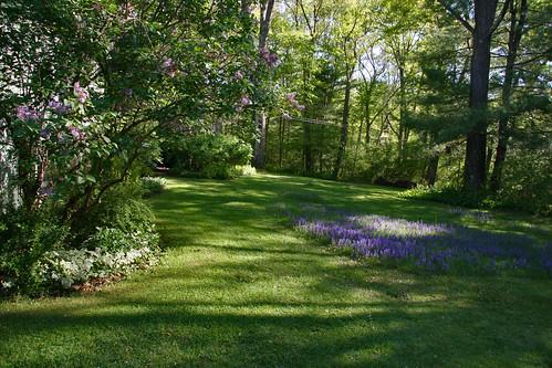 mom and dad's backyard