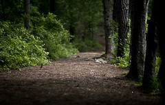 Trail at Line Creek (mjkjr) Tags: trees atlanta green bird robin forest ga georgia landscape woods shadows dof atl vibrant wildlife birding handheld canondslr newnan magichour desktopwallpaper 135mm desktopbackground fayettecounty f20 135l cowetacounty 2011 potn canonlenses linecreek scoutinglocations newnanga t2i ef135mmf2lusm linecreeknaturearea magicprime mjkjr httpwwwflickrcomphotosmjkjr bestcanonlens