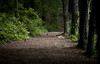 Trail at Line Creek (mjkjr) Tags: trees atlanta green bird robin forest ga georgia landscape woods shadows dof atl vibrant wildlife birding handheld canondslr newnan magichour desktopwallpaper 135mm desktopbackground fayettecounty f20 135l cowetacounty 2011 potn canonlenses linecreek scoutinglocations newnanga t2i ef135mmf2lusm linecreeknaturearea magicprime mjkjr httpwwwflickrcomphotosmjkjr bestcanonlens