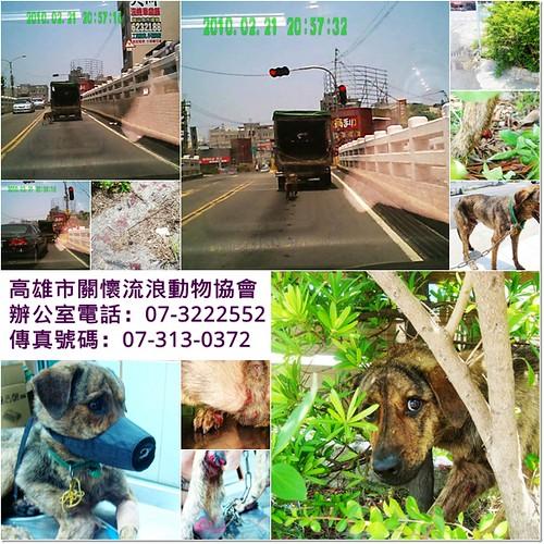 「人肉搜尋」高雄岡山涉嫌虐待動物拖狗上路又遺棄於路邊,還隱匿車牌的小貨車,請幫忙提供線索,抓出不良份子,謝謝您,20110530
