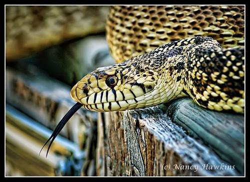 Going Snakey by Nancy Hawkins