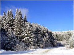 Mountain Road (Stella VM) Tags: road blue trees winter sky white mountain snow tree nature pine forest landscape bulgaria wonderland spruce bulgarian vitosha   supershot      platinumphoto citrit goldstaraward