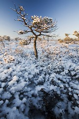 04012009. Marimetsa Nature Reserve. 9722. (Tiina Gill (busy)) Tags: winter snow tree frost estonia bog blueribbonwinner abigfave marimetsa