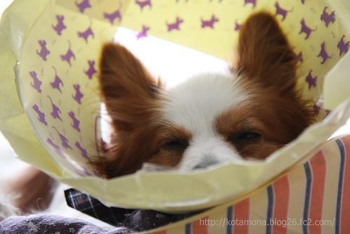 ボクは眠いんです。。。ZZZzzz。。。