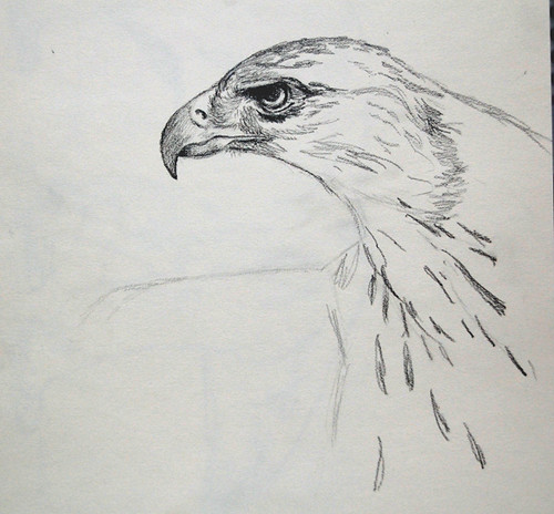 eagle sketch, Kathleen Coy