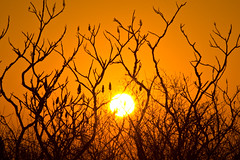 RACINE SUNRISE (Mike Strande) Tags: orange sunrise branches foreground racine