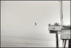 (in girum) Tags: ocean california blackandwhite bw bird beach sepia canon eos pier losangeles fishing venicebeach westcoast bwdreams blackwhitephotos