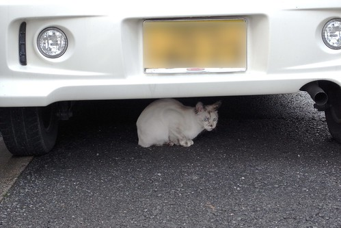 Today's Cat@20090214