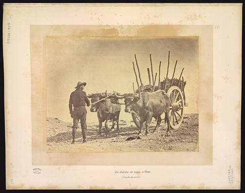 Boyero en Toledo en el siglo XIX. Foto Jean Laurent. Biblioteca Nacional de Brasil