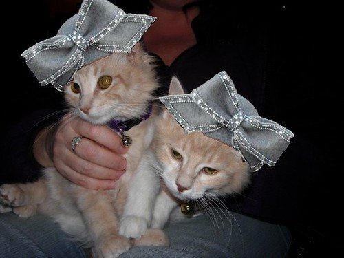 Kittens With Hats