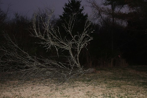 The fallen tree in the yard