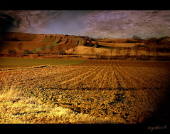 ~ the field without limit ~ (together8) Tags: texture nature field landscape austria friendship spirit soe blueribbonwinner outstandingshots bej abigfave platinumphoto nikond40 betterthangood proudshopper theperfectphotographer llovemypic natureselegantshots qualitypixels obq vosplusbellesphotos goldenart together8 sensationalphoto artistictreasurechest greatshotss themonalisasmile imagesforthelittleprince musicsbest dedicationtothor