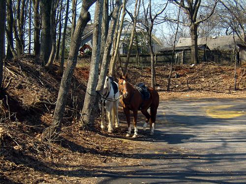 P3052283-Horses-At-Manuels