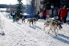 Buddy Streeper & Team (i_Scene_Alaska) Tags: world dog dogs alaska race fur championship open buddy anchorage sled 2009 streeper rondezvous