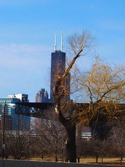 Chicago Skyline (El_Sol) Tags: blue sky chicago tree skyline saturday lakemichigan
