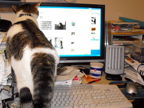 Victor Blogging 2