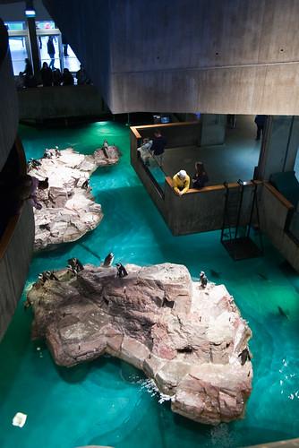Penguin habitat - NEAQ
