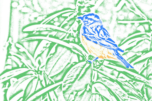 sparrrow bluebird