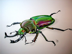Beetle a Day (GunnerGirl) Tags: art nature illustration bug painting insect sketch beetle sketchbook draw coleoptera beetleaday