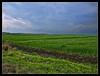 campi verdi di Sicilia (Andrea Rapisarda) Tags: verde green geotagged sicily sicilia militello olympuse510 rapis60 andrearapisarda siciliainhdr militelloinvaldicatania geo:lat=37264814 geo:lon=14918427
