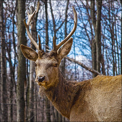 ~ Follow Me ~ (ViaMoi) Tags: nature wildlife deer antlers stare buck naturalist digitalcameraclub abigfave platinumphoto ultimateshot theunforgettablepictures viamoi goldstaraward 100commentgroup