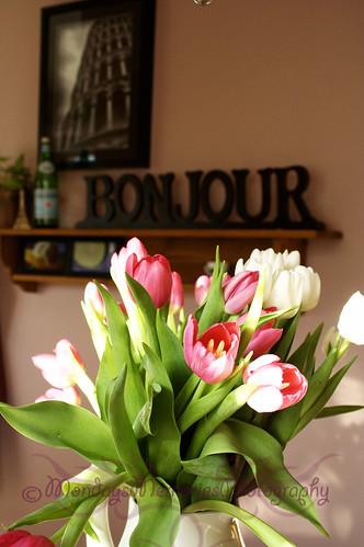 Pink & White Tulips 3