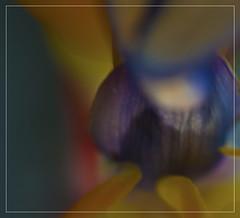 art (d.teil) Tags: china red orange plants inspiration plant flower color detail macro green art up garden square hearts nikon asia colours close heart artistic blossom framed blossoms grow style blumen center frame strong shenzhen colored bud nah grn macros blume blatt 2008 bltter coloured farbe garten 2009 farbig squared bunt nahaufnahme knospe quadrat stil nahe dteil