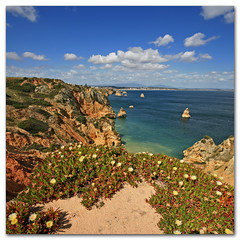 Coastal flowers - Western Algarve, Portugal (s0ulsurfing) Tags: flowers blue light shadow sea sky cloud sunlight holiday seascape color colour tourism beach portugal water weather rock clouds contrast square landscape golden bay coast sand rocks heaven paradise skies shadows wind cove gulls wide steps shoreline fluffy wideangle tourist stack stairway coastal shore cumulus april vista coastline algarve humilis puffy 2009 sunbathing squared nube cliche bold foreground stacks meteorology nephology 10mm sigma1020 s0ulsurfing pontadapiedade westernalgarve cumulushumilis vertorama mondocafeclub