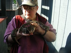 A recent depiction of my typical gender expression (with Sydney, my neighors sisters ball python)