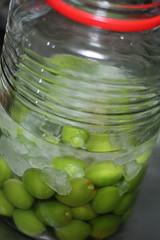 20090531 梅酒2009用の材料