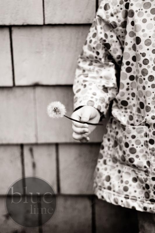 [dandelion]