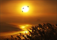 Sun birds! (adrians_art) Tags: winter red sun seagulls mist reflection water grass weather birds silhouette yellow fog sunrise reeds wings flight rivers supershot aplusphoto vosplusbellesphotos
