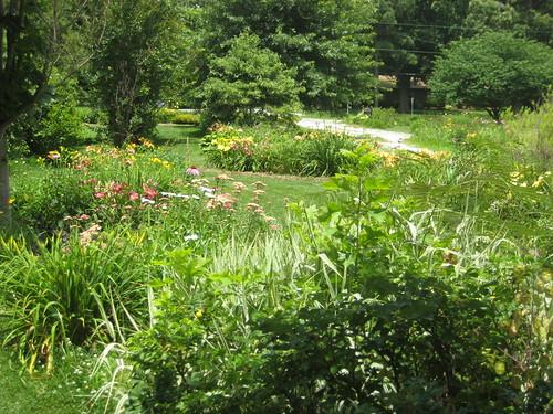 daylily beds