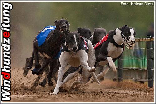 Sandbahnmeisterrennen 2010 Münster: 275m Finale Greyhound-Rüden