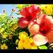 A FESTA DAS FLORES  -The Party of Flowers