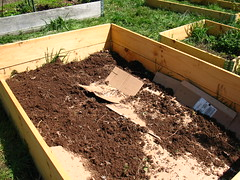 making a new raised bed
