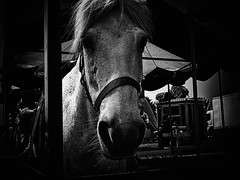 SQUARE OLD HEART (hobokollektiv | llooqo) Tags: leica blackandwhite horse digilux2 fair fest brandenburg pferd blackheartprocession velten hobokollektivnet