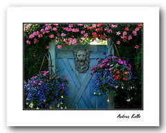 Garden Gate (Andrea Kollo Photography) Tags: flowers toronto ontario flower color nature colors gardens garden countryside flora calendar postcards calendars stockphotography artphotography gardentour gardentours ruralontario ruralgardens colorfulflowers naturephoto supershot flowerphotography bej gardenlandscape kingtownship gardenlandscaping shuttersisters zenenlightment colourfulflower gardenlandscapes blipfree andreakollo springhillphotography