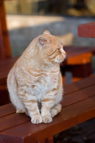 Польский котик
