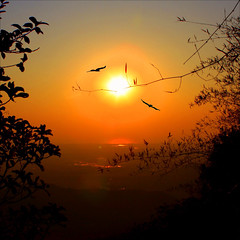 Sunset in Goa (JannaPham) Tags: sunset vacation sun india birds silhouette sunrise landscape goa bamboo explore explorefrontpage jannapham