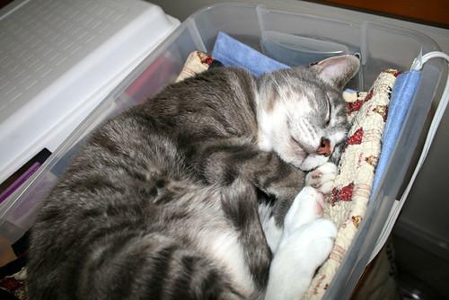 kb on his heating pad