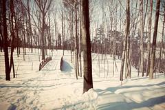 winter crossing. (< brian >) Tags: bridge trees winter snow forest seasons path processed lionsgate nicedayforawalk ivebeennuzzledbythemd orthemdlovesme imawesomebecausethemdsayssoetcetc